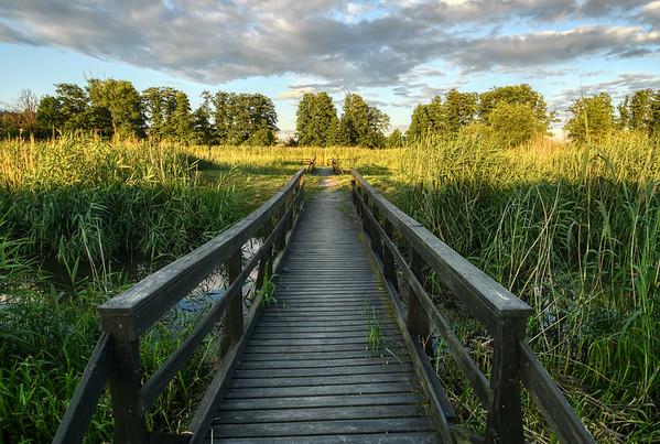 Bridge to the Wetlands