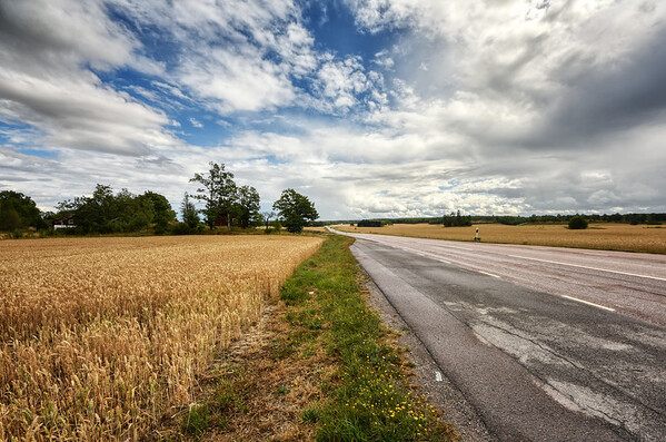 The Roadside Clouds