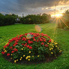 Sunbeam Flower Bed