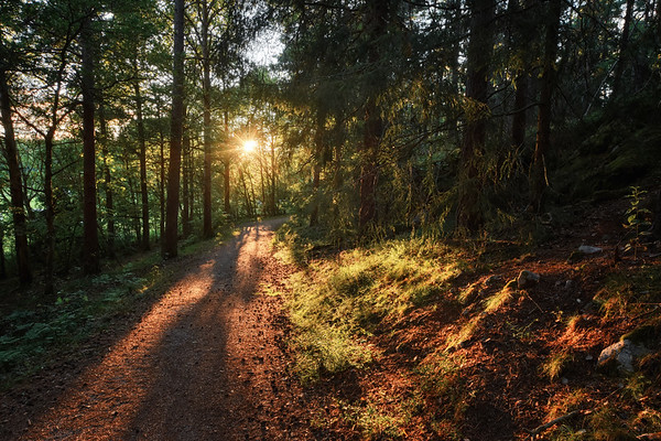 Shadow Path Sunset