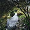 Garden Center Pond