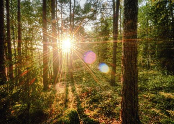 Fantasy of Sun Bursts