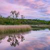 Calm Pink Lands