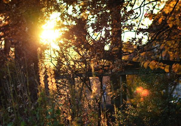 A Sunny Autumn