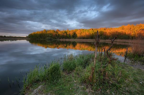 Grass Stick Sunset