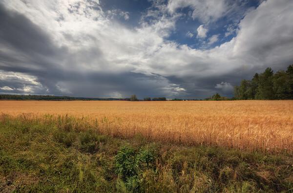 Wheat Field Clouds
