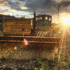 Railroad Brush Sunset