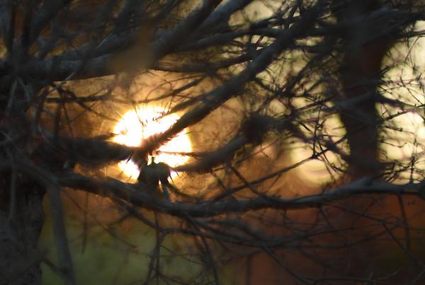 Fire Through Woods