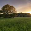 Forest Sunset Field