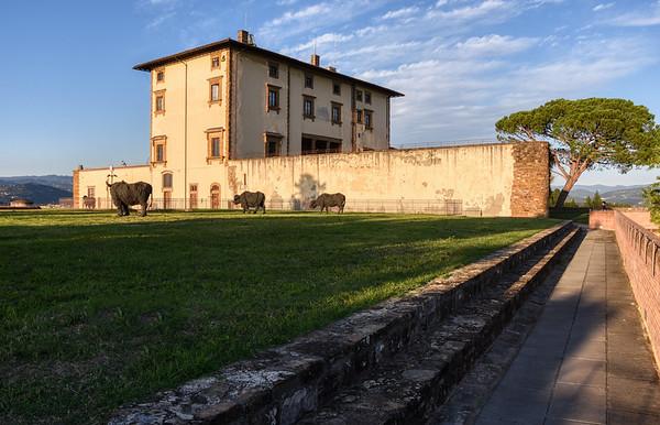 Grass of Fort Belvedere