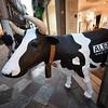 Urban Street Cow