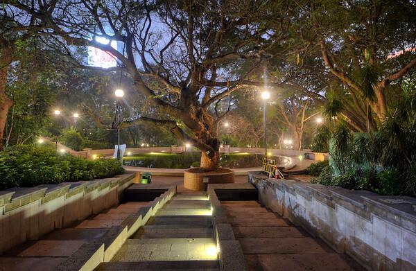 Kowloon Park Tree
