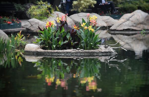 Flower Boat Pond