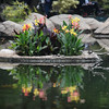 Flower Boat Pond