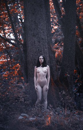 Red Forest Nymph