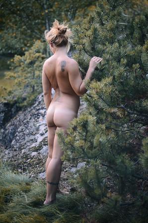 Amid the Spruce