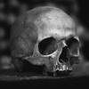 A Skull in the Dark