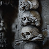 The Sedlec Bones