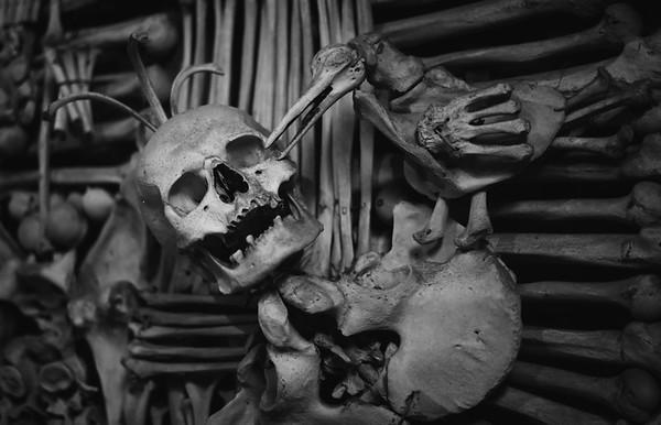 A Skeleton Bird