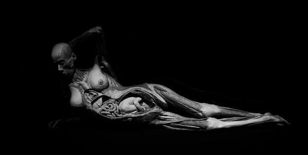 The Morbid Venus