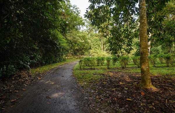 Muddy Island Road