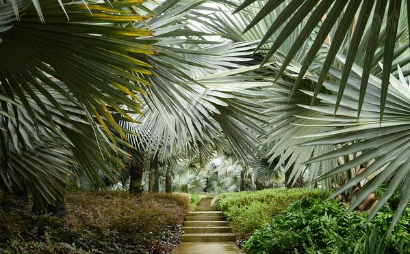 Mystical Garden Path
