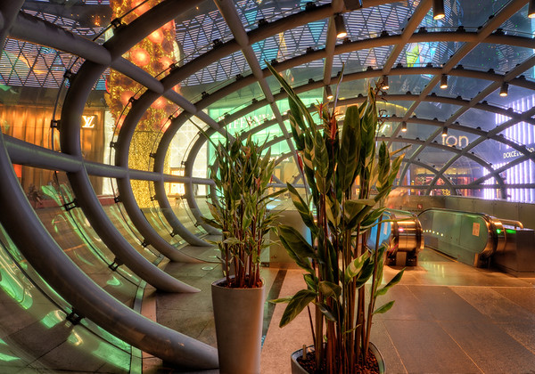 ION Orchard Plants