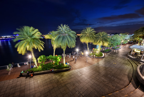Palm Trees Evening