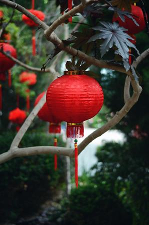 A Chinese Lantern