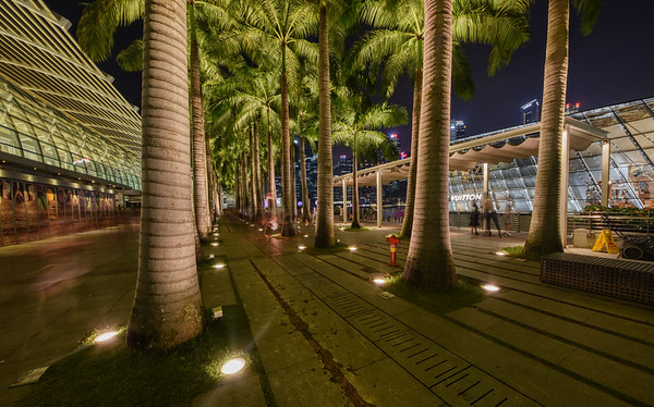 Marina Bay Trees