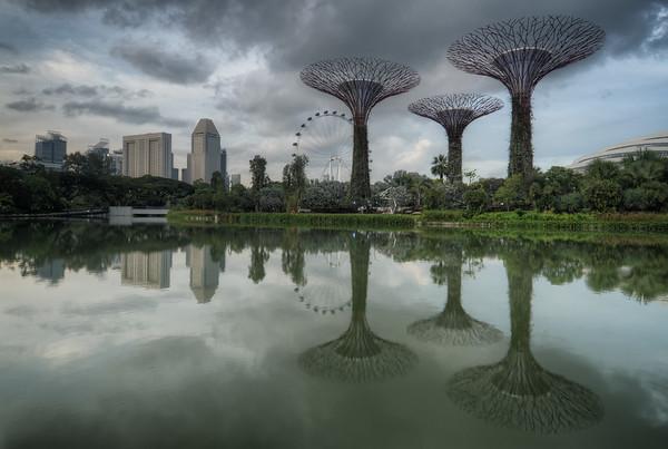 Silver Garden Trees