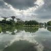 Dragonfly Lake Garden
