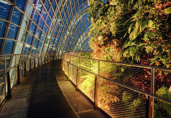 Cloud Forest Walk II