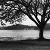 A Tree of Shadows