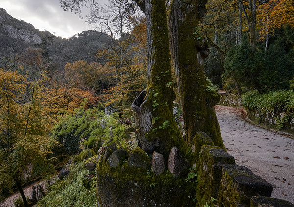 Path of Quinta Park