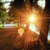 Game Park Sunstar