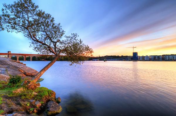 Dramatic Tree Sunset