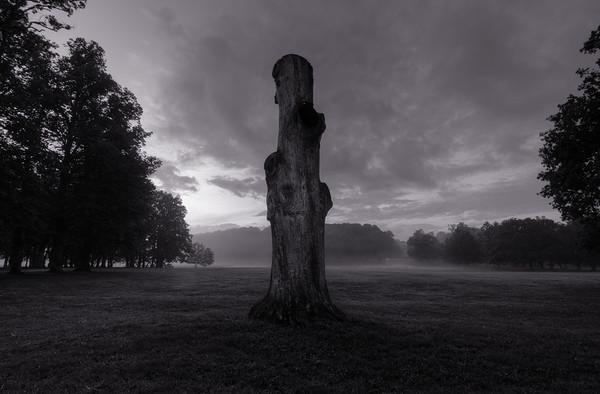 Stump in the Fog