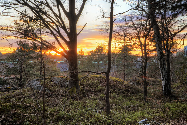 Cemetary Forest Sunset