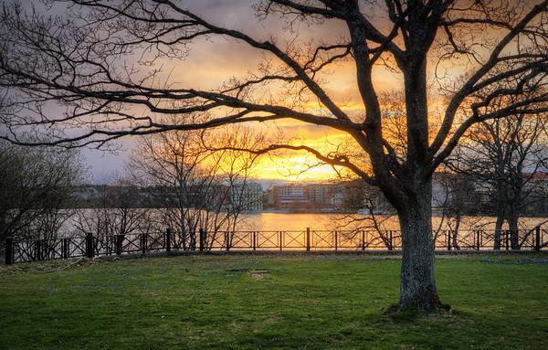 Sunset Tree Yard