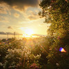 Nature Sunset Peak