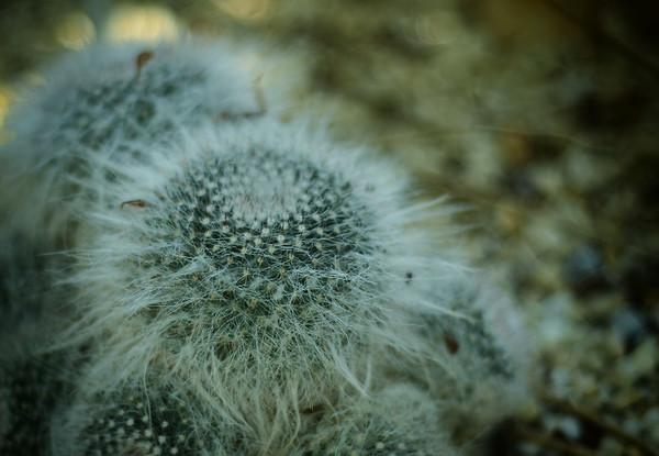 The Einstein Cactus