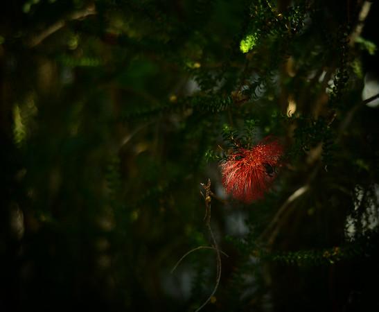 Little Red Flower