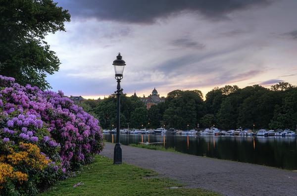 Flower Sunset Scenery