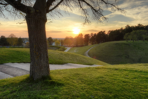 A Woodland Sunset