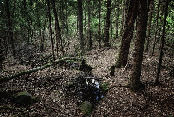 The Forest Drain