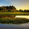 Oval Lily Pond