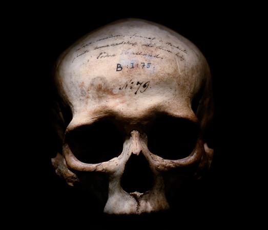 The Ink Skull