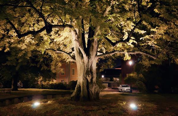 Knight's Square Oak