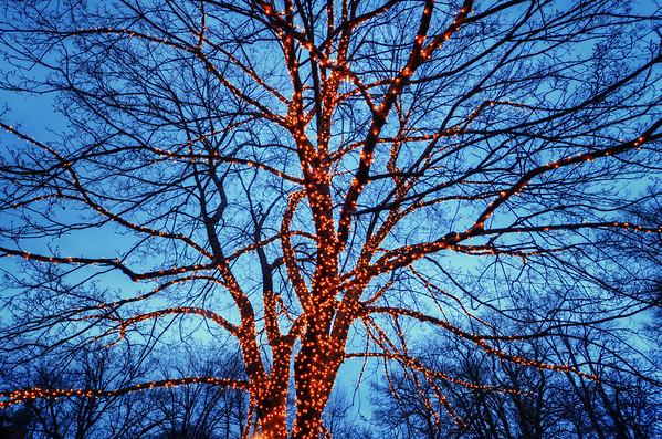 Vasa Lit Tree